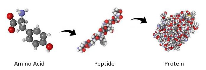 Аминокислота, пептид, белок