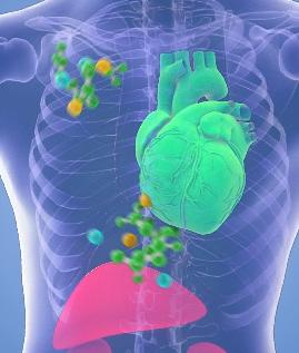 Пептиды Хавинсона восстанавливают клетки