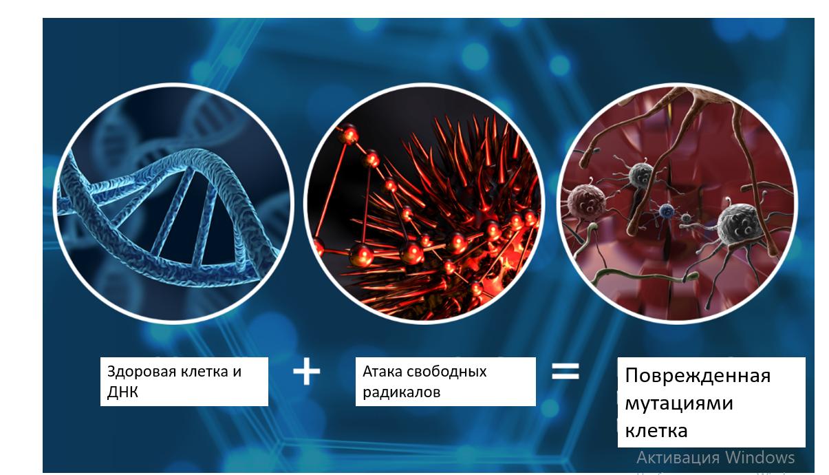 Поврежденная мутациями и атакой свободных радикалов клетка