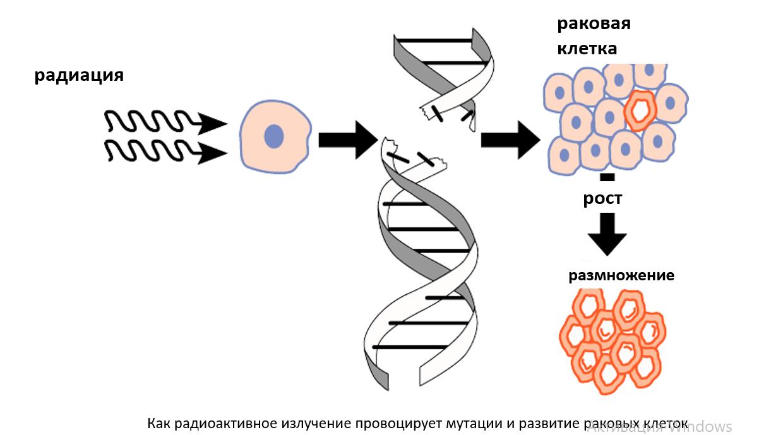 Как радиация провоцирует мутации. Прием биорегуляторов пептидов препятствует развитию рака.