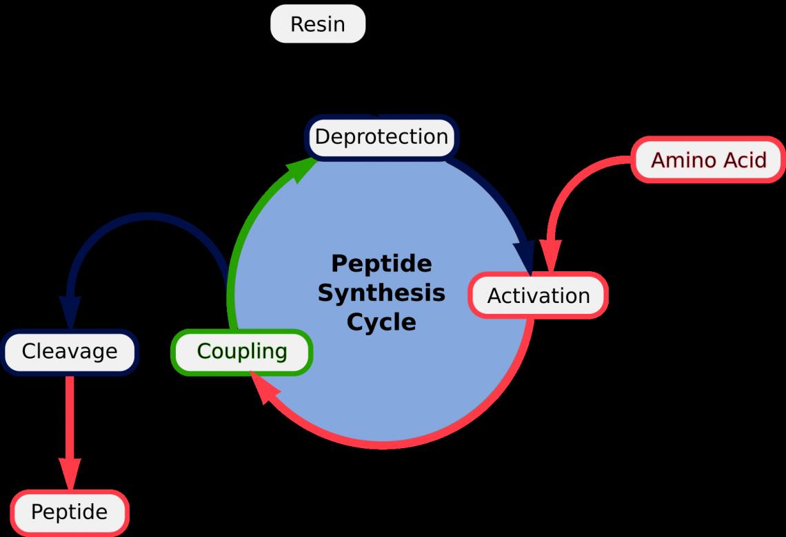 синтез пептидов