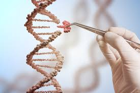 лекарство от старости увеличило количество делений клеток