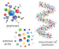 пептиды в красном вине, белки, аминокислоты